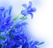 Цветы (flowers) MENSB7_t