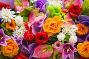 Цветы (flowers) MENSBK_t