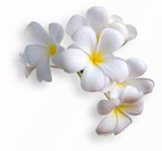 Цветы (flowers) MENSAU_t