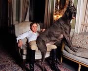 Дреа де Маттео (Drea de Matteo) New York Times Photoshoot 2005 (5xHQ) ME119SY_t