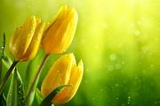Цветы (flowers) MENSDV_t