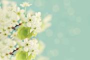 Цветы (flowers) MENSAV_t