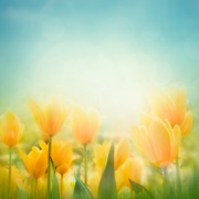 Цветы (flowers) MENSAX_t