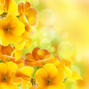 Цветы (flowers) MENSBE_t