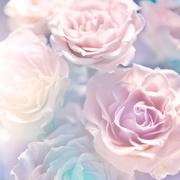 Цветы (flowers) MENSBU_t