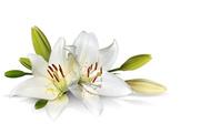 Цветы (flowers) MENSAW_t